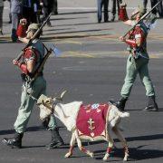 """MD49. MADRID, 12/10/2010.- Con su peculiar paso rápido y con la cabra como mascota, la Legión ha participado con dos compañías del Tercio """"Duque de Alba"""" 2, que este año celebra el 90 aniversario de su fundación, en el el desfile militar que se ha celebrado esta mañana en el madrileño Paseo de la Castellana con motivo de la Fiesta Nacional y que ha sido presidido por el Rey. EFE/Ballesteros TELETIPOS_CORREO:%%%,%%%,%%%,MADRID"""