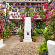 p-d-flowers-patios-in-cordoba-1200x750