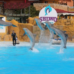 Delfinario SWM1424166898