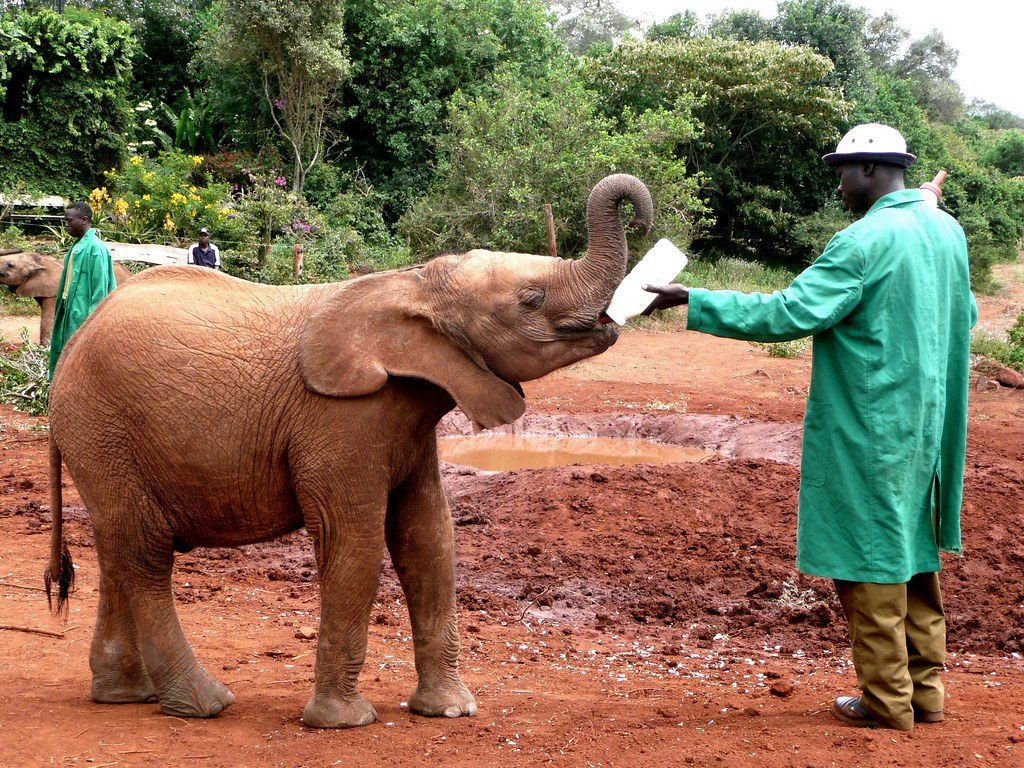 David & Daphne Sheldrick elephant orphanage, Nairobi