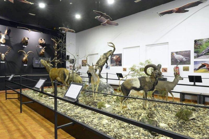 Museo.jpgç
