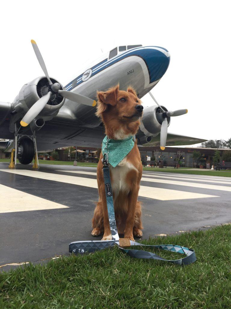 avion-de-perro-696190