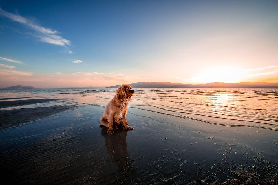 beach-1854123_960_720