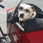 dog_motorcycle_animal_vintage_funny_pet_travel_glasses-1369187 logo