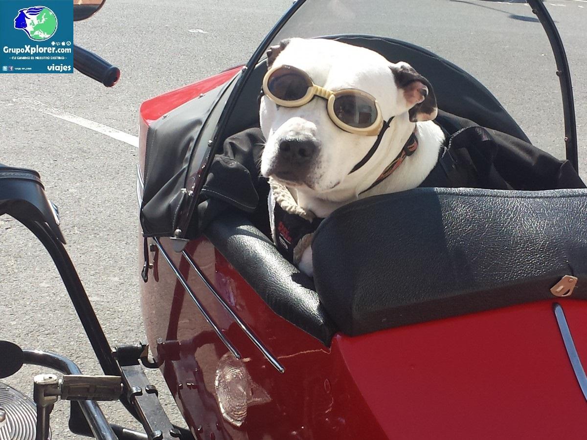 dog_motorcycle_animal_vintage_funny_pet_travel_glasses-1369187 logo