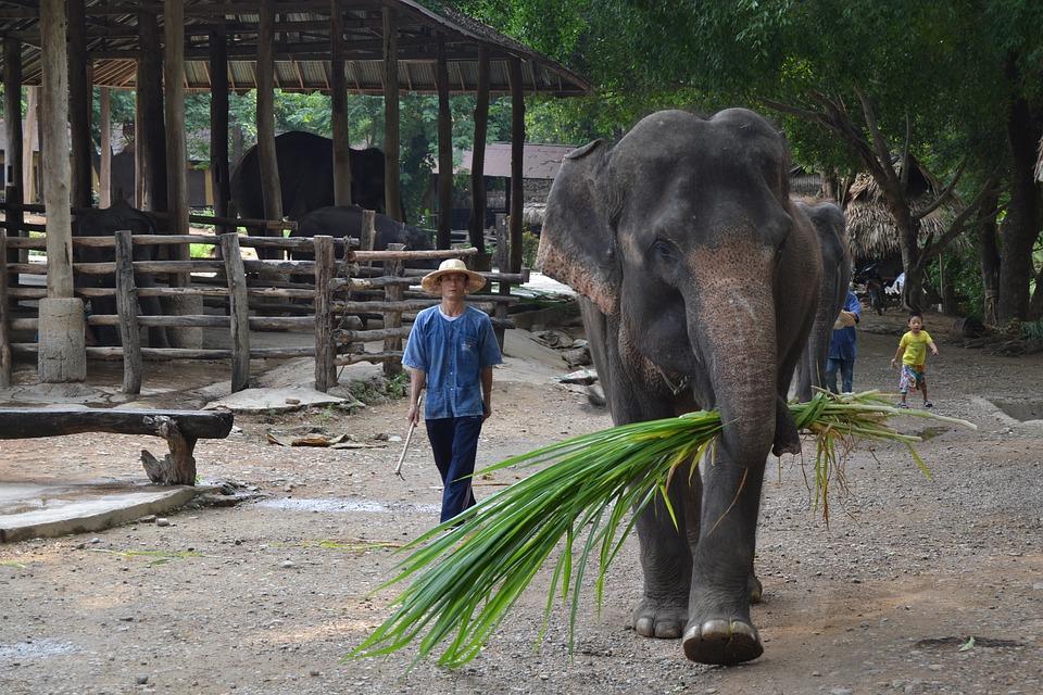 camp-elephants-2319065_960_720