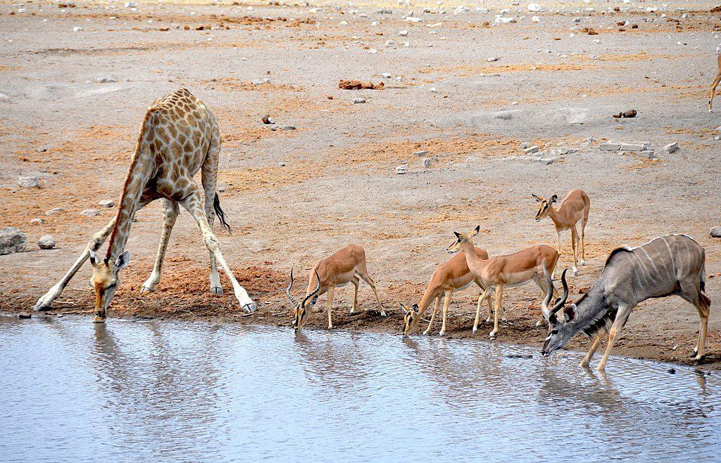 1024px-Etosha_National_Park,_Chudop_waterhole