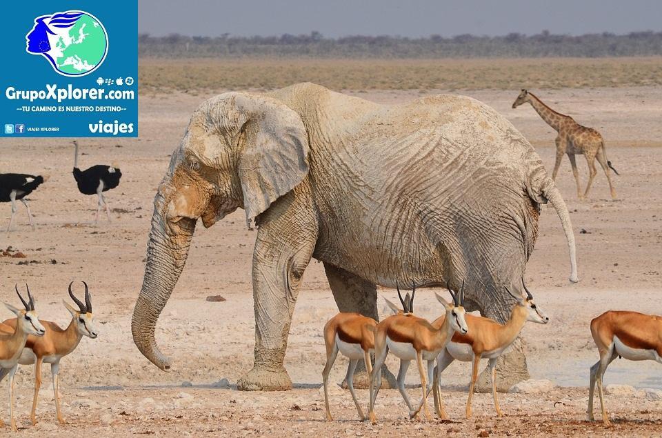 Africa Namibia National Park Elephant Etosha