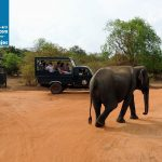 Tourism_Yala_National_Park