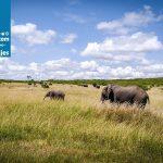 1024px-Masai_Mara_Wildlife_(120793085)
