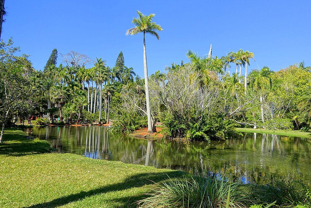 1024px-Pond_-_Sarasota_Jungle_Gardens_-_Sarasota,_Florida_-_DSC02006