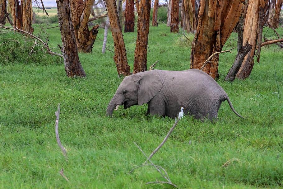 africa-kenya-amboseli-safari
