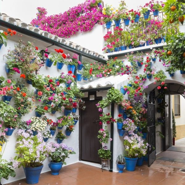 patios_de_c_rdoba_flowerpot_green_cordoba_spain_flowers_flower_potted_plant-573534