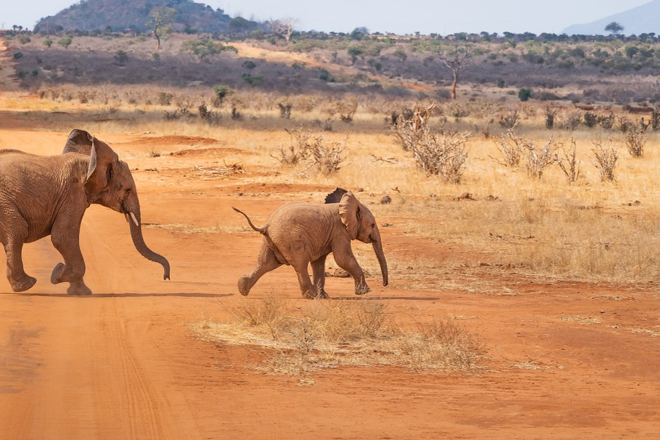 safari-4043090_960_720