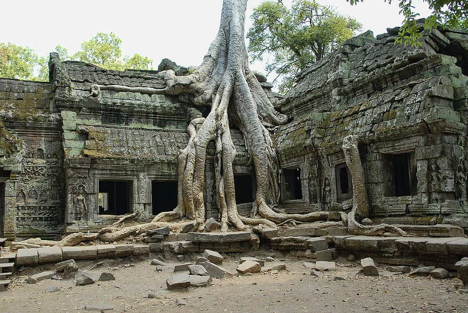 ta-prohm-cambodia-angkor-wat