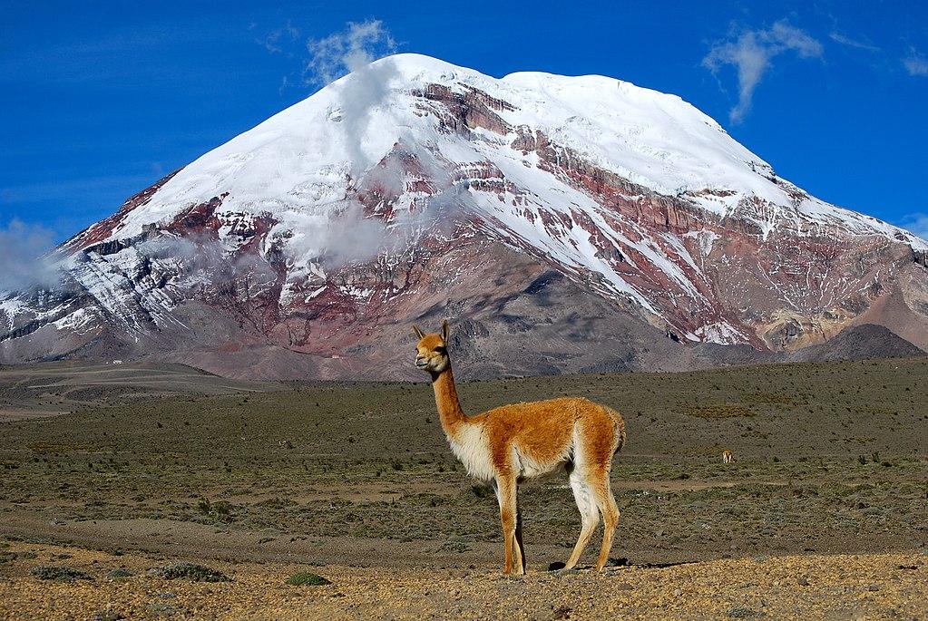 1024px-Vicuña_-_Chimborazo,_Ecuador