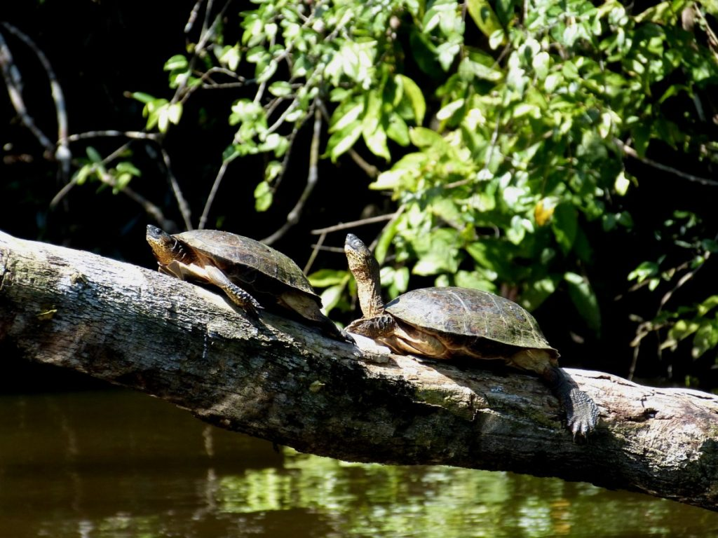 turtles_turtle_animal_water_creature_log_sit_sun_sea_turtle-1342931